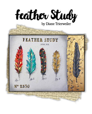 Feather Study Slide